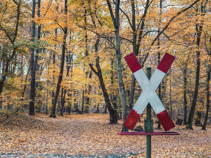Railroad Crossing Sign in the woods with autumn leaves, vibrant colors Tree Autumn Change Plant Land Day Nature No People Forest Outdoors Beauty In Nature Leaf Orange Color Plant Part Non-urban Scene Scenics - Nature Tree Trunk Trunk Red Railroad Crossing Autumn Collection