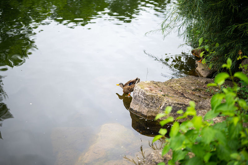 High angle view of a bird in lake