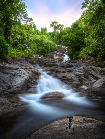 Tree Plant Water Beauty In Nature Scenics - Nature Long Exposure Motion Nature Flowing Water Land Forest Waterfall Blurred Motion Non-urban Scene Day Sky Real People People Outdoors Power In Nature Flowing