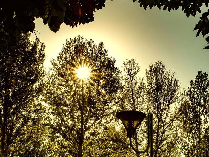 Lights 1 Sun Sun Star Sun Star Effect Tree Street Light Candelabra Sky Light Orange Calm Relax Warm Tree Sunset Silhouette Sky The Great Outdoors - 2018 EyeEm Awards Summer In The City Capture Tomorrow