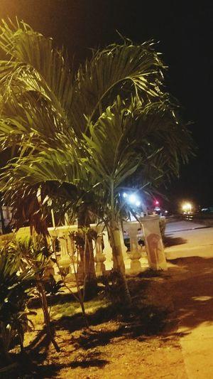 Lindo Illuminated Night