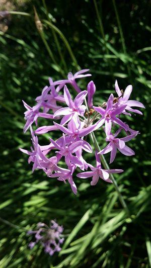 Flowers of Orange County