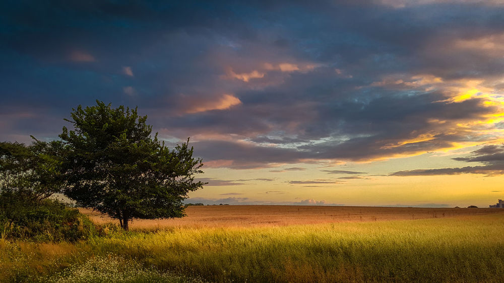 Agriculture Beauty In Nature Cloud - Sky Day Field Grass Growth Landscape Nature No People Outdoors Rural Scene Scenics Sky Sunset Tranquil Scene Tranquility Tree