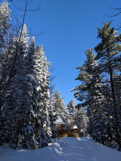 Blue Sky Trees