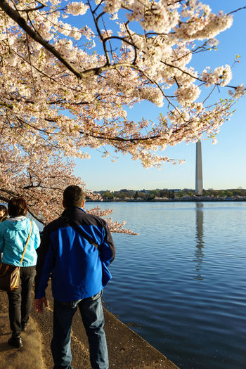 Capital Cities  Cherry Blossoms Here Belongs To Me International Landmark Jefferson Lake Lincoln Memorial Monument Pastel Photography In Motion Sightseeing Sun Sunrise Things I Like Tree Urban Spring Fever USA Washington Washington, D. C.