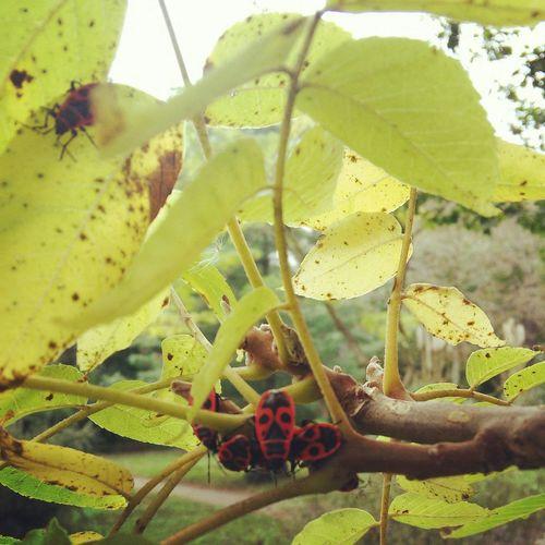 Ugurbocegi Ladybug Ladybugs ıstanbul Sariyer Orman Forest Animals Doğa Nature Trees Ladybird Ladybirds 🐞 Agac Ladybirds