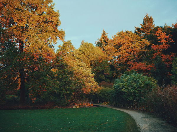 Arboretum Bokrijk Belgium Autumn Autumn Colors Beauty In Nature Nature Outdoors The Great Outdoors - 2017 EyeEm Awards