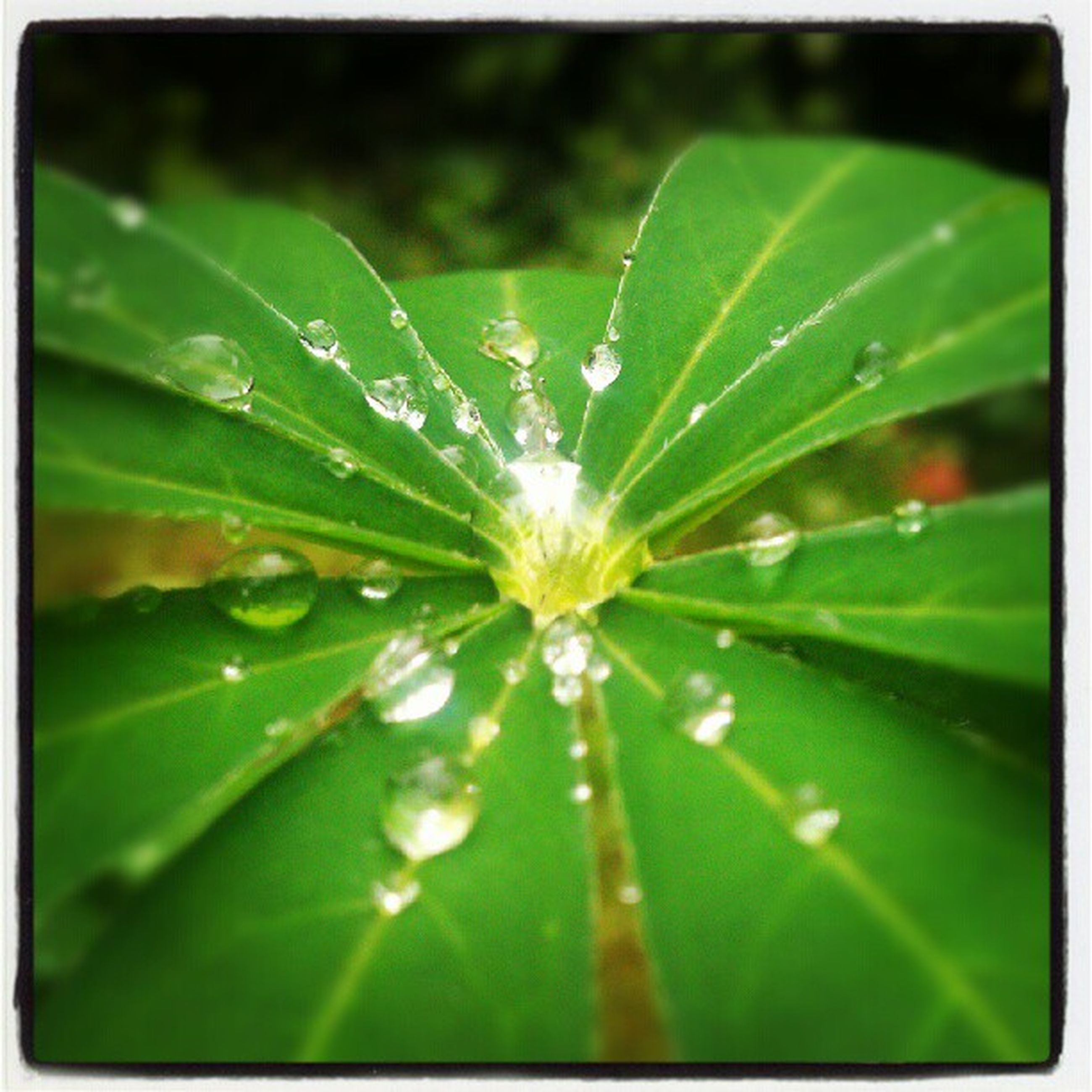 drop, freshness, water, fragility, wet, growth, close-up, dew, leaf, green color, beauty in nature, nature, focus on foreground, raindrop, flower, transfer print, plant, water drop, auto post production filter, selective focus