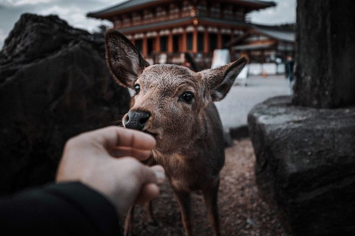 Cropped hand petting deer