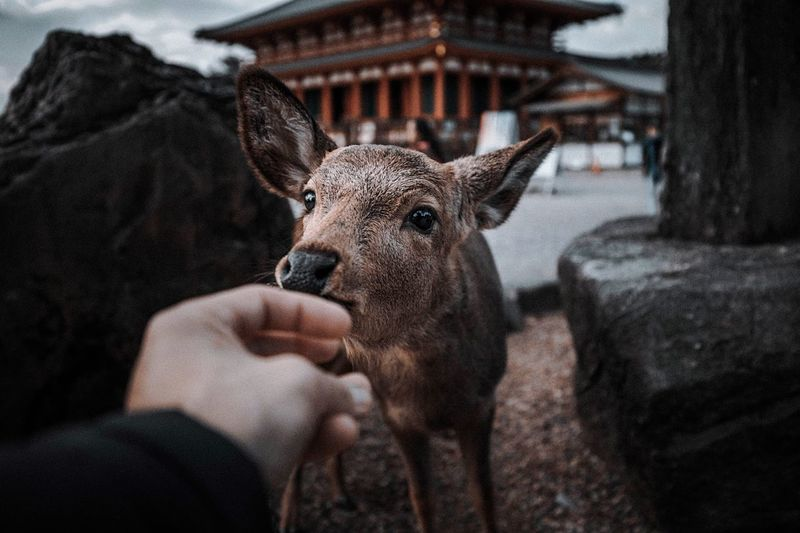 Cropped hand petting deer