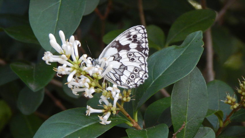 Beauty In Nature Butterfly Close-up Flower Freshness Leaf Nature White Color