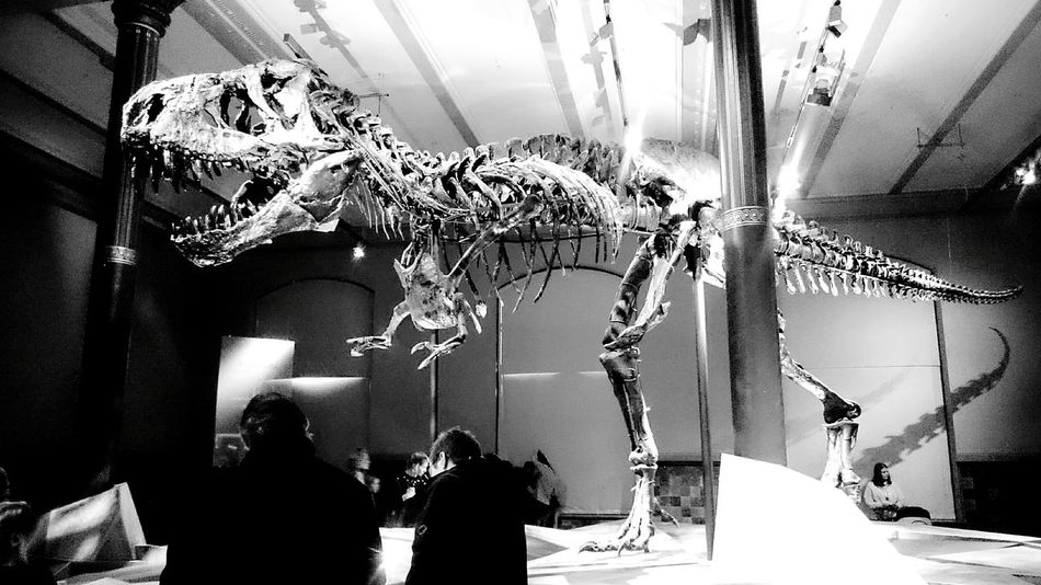 Tristan. Dinosaurier  Museum Naturkundemuseum Naturkundemuseum Berlin  Berlin Mitte Raaww Black And White Black And White Collection  Black And White Photography