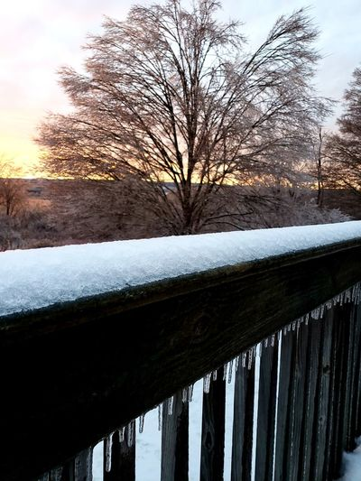 Tree Snow Bare Tree Cold Temperature Winter Water Sunset Frozen Water Snowing Branch
