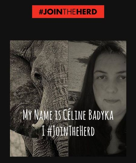Si vous voulez signez la pétition le lien est en bas.... JoinTheHerd Join The Herd Https://yearoftheelephant.org/ Protect Animals Protect Nature Protect The Environment Animal Love