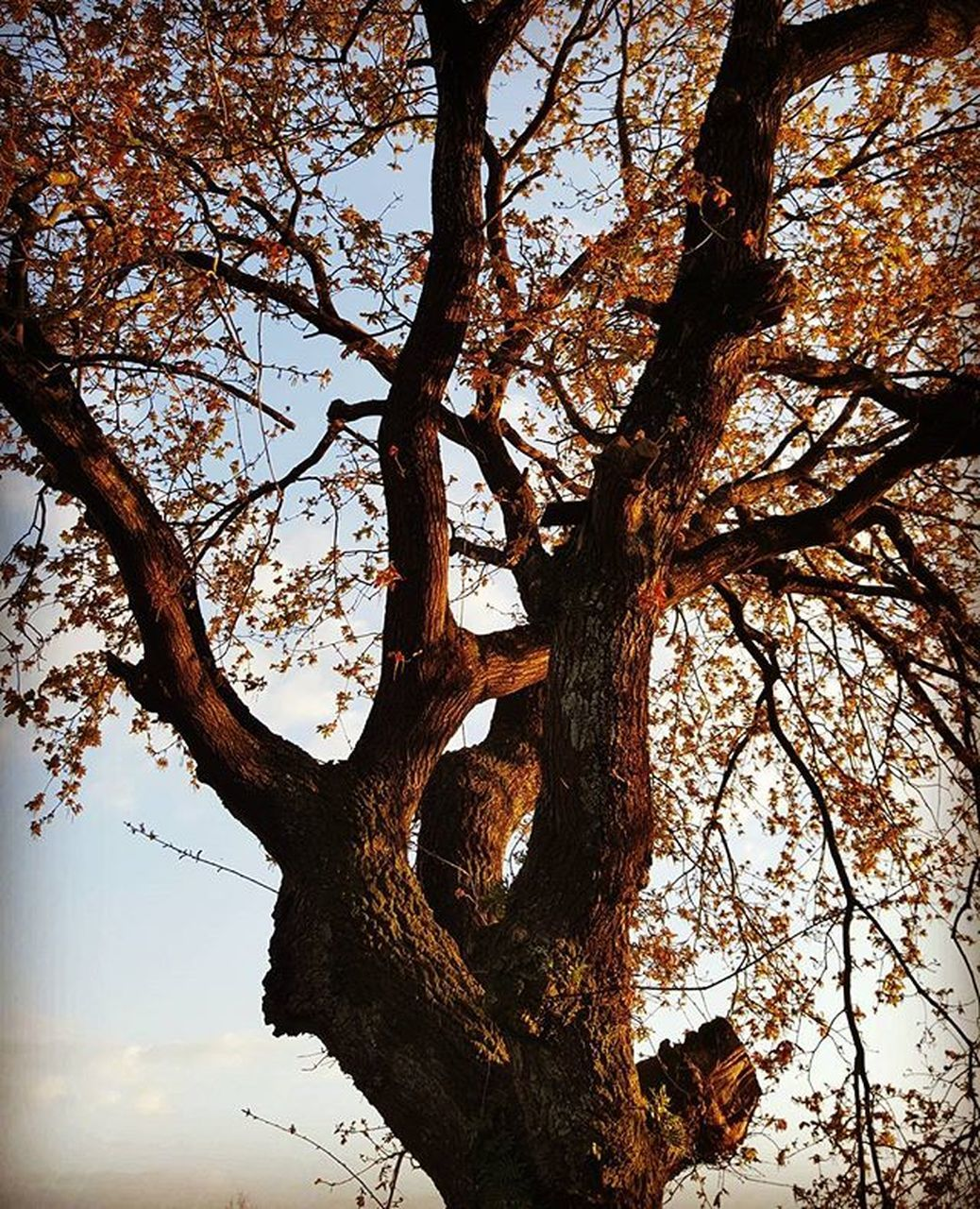 tree, tree trunk, branch, nature, growth, tranquility, beauty in nature, outdoors, no people, day, low angle view, scenics, sky