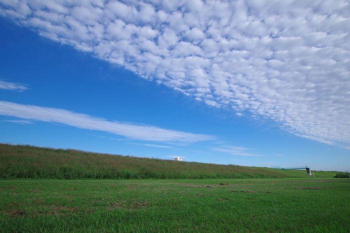 Sky Grass 淀川