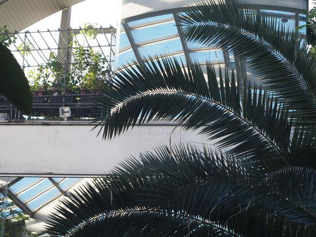 熱帯植物園 植物園 Botanical Gardens Architecture Architecture Interior Leaves🌿 Plants 🌱 Nature Low Angle View Reflection Pattern Pieces EyeEm Nature Lover From My Point Of View Hello World Enjoying Life Taking Photos