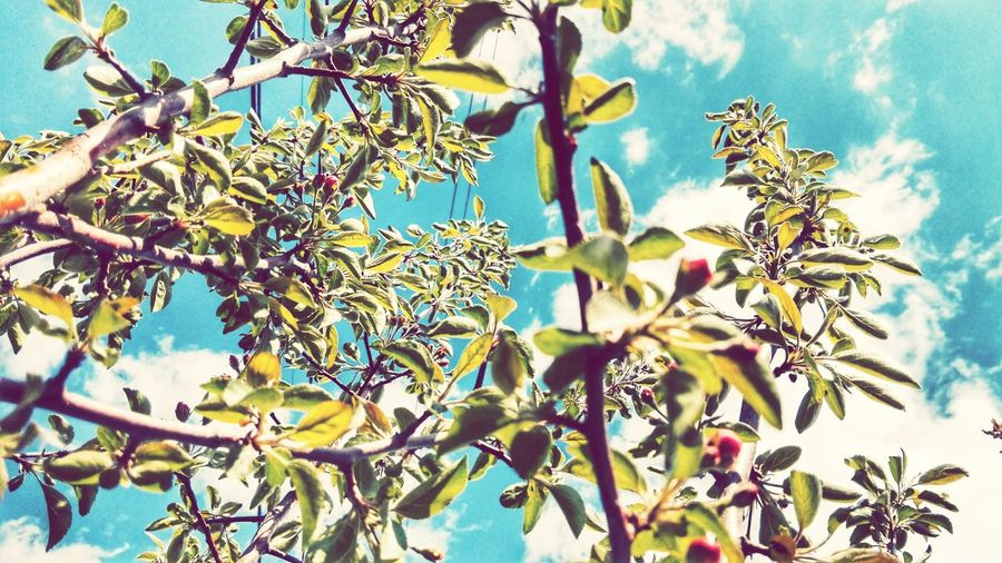 Tree Growth Nature Branch Day No People Beauty In Nature Outdoors Low Angle View Plant Flower Sky Freshness Fragility Close-up Flower Head