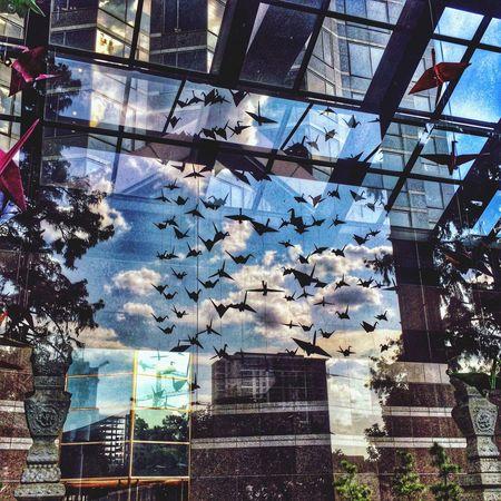 Birds Paperbirds Reflexions
