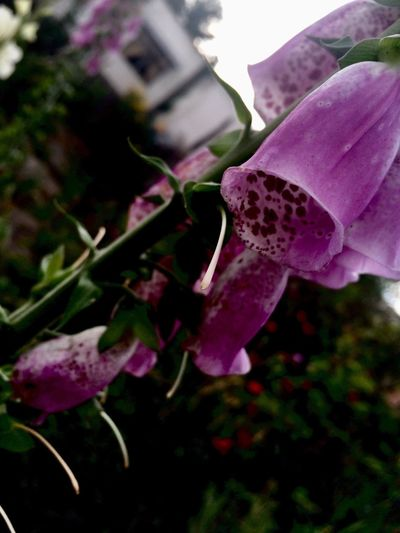Flower Growth Nature Beauty In Nature Plant Fragility Petal No People Blooming Outdoors Close-up Day Flower Head