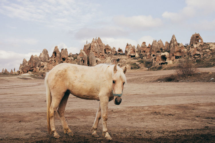 Horse in the desert