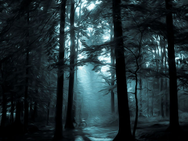 Mystic woods Dark Mystic Nature Tree Trees Bicycle Black Blue Forest Forest Photography Mystical Outdoors Woods