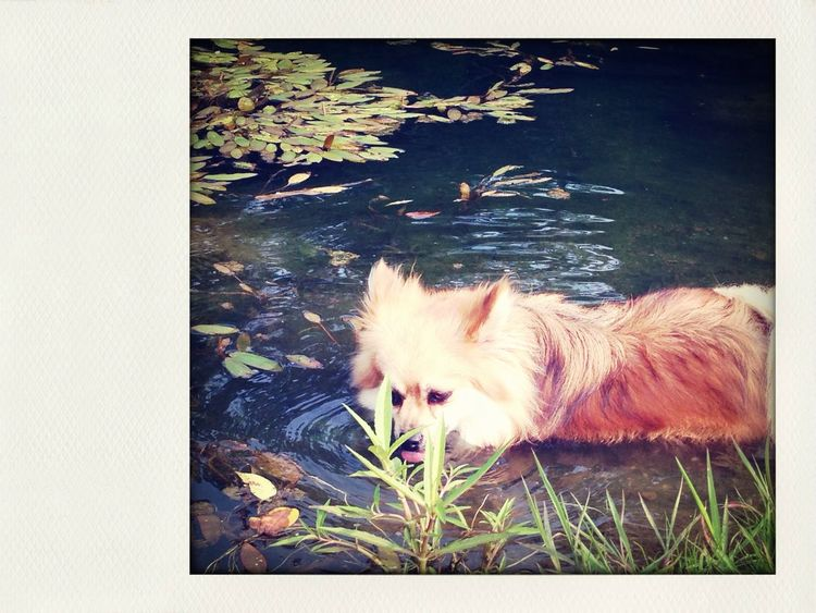 Chino is so hot he sat in the water!