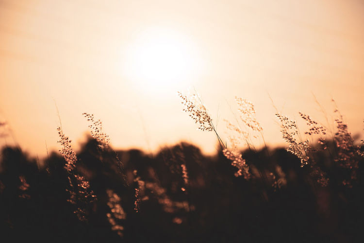 Grass flowers with beautiful warm sunshine ,meadows with fair light from the sun-vintage style