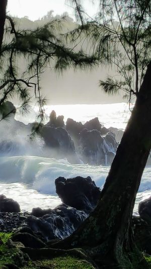 Hawaii Nature Samsung Tree Aloha Beach Beauty In Nature Day Flowing Water Land Nature No People Outdoors Pacific Ocean Plant Rock Rock - Object Scenics - Nature Sky Solid Sunlight Tranquil Scene Tranquility Tree Water Winter