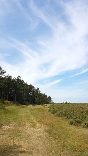 Agriculture Field Rural Scene No People Cloud - Sky Nature Tree Landscape Sky Beauty In Nature Outdoors Day Scenics Summer Freshness Tranquil Scene Forest Growth Beauty In Nature Tranquility Tree Trunk Outdoor Pursuit Holkham Holkham Beach Norfolk