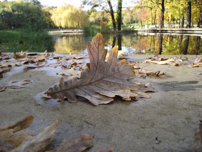 Nature Water Leaf Outdoors Reflection Autumn Beauty In Nature No People Day Tree Tranquility Change Scenics Lake Close-up Fragility