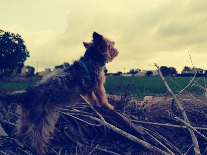 I am curious about what she saw ahead 😀😀 Whats Ahead? Dog Dogs Cute Pets Cute Dogs Looking Ahead Horizon Dog Staring Dog Summer Dolores Nature Wildlife