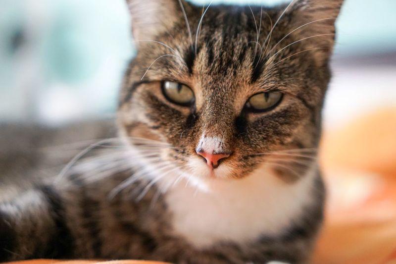 Cats Cat EyeEm