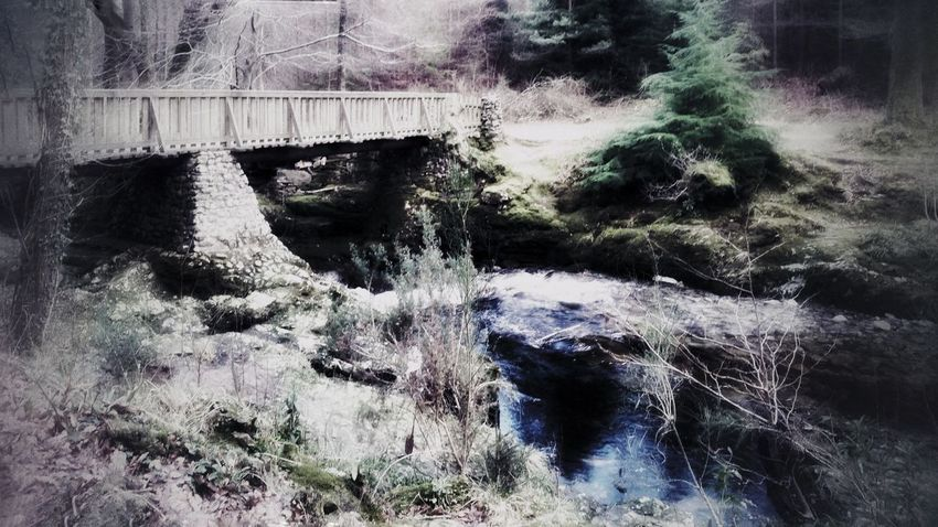 Riverside Forest Tree Tollymore Forest Park Travel Photography Beauty In Nature