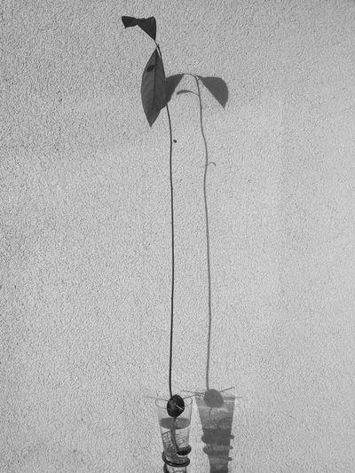 Shadow of bird on wall