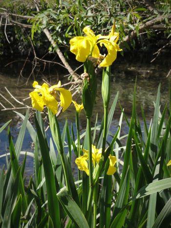 Yellow Flower Beauty In Nature Wildflower