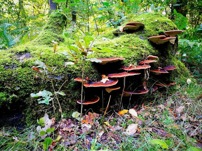 Abandoned mushrooms on field in forest