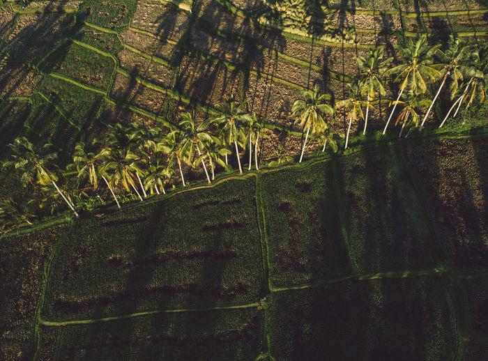 Trees growing in field