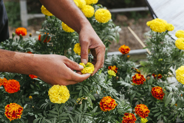 Close-up of hands holding flowers