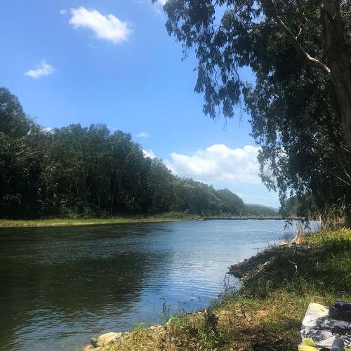 Trees Riverside