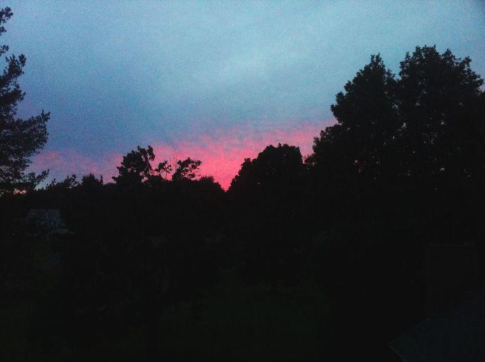 Sunset Pink Crimson Dark Woods