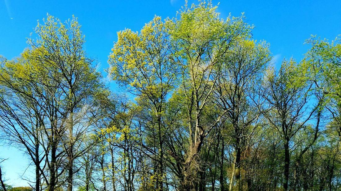Lemon Lime By Motorola Naturelovers Trees Taking Photos Nature Beautiful Green Greenery