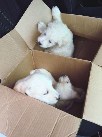 Puppies Puppies EyeEm Selects Domestic Mammal Pets Domestic Animals Dog Animal Themes Canine Cardboard Box No People