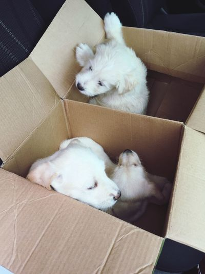 High angle view of puppies in cardboard box