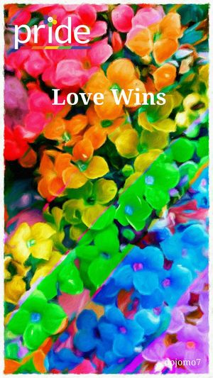 Love Wins Colorful Streamzoofamily Gay Pride Pride Love Wins