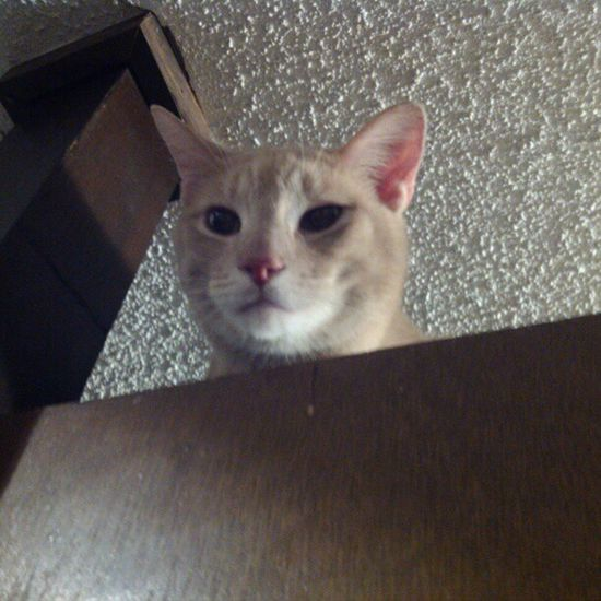 I'm watching you down there, cupcake! I know all and i see all-- guardian of the kitchen. Meow Catlady