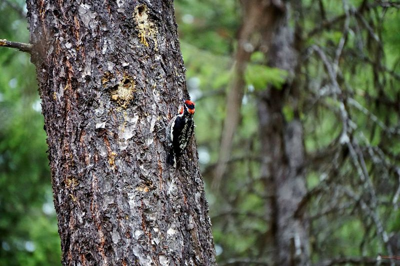 Bird Photography Birds Of EyeEm  Woodpecker In Tree Bird EyeEm Selects Insect Focus On Foreground Animals In The Wild Animal Themes Tree Invertebrate Animal Wildlife Animal Close-up Nature Plant Tree Trunk No People Day Beauty In Nature Outdoors