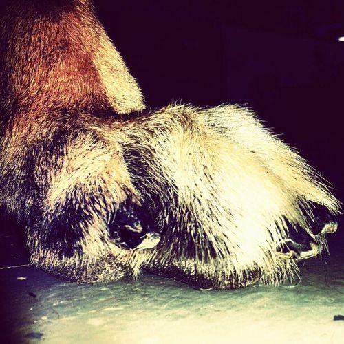 Dogart Paws Art