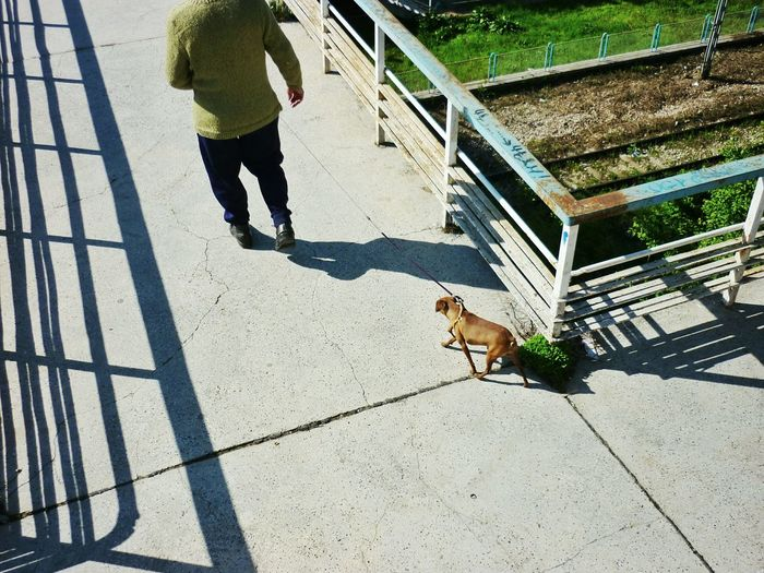 Low section of man walking with dog on footpath during sunny day