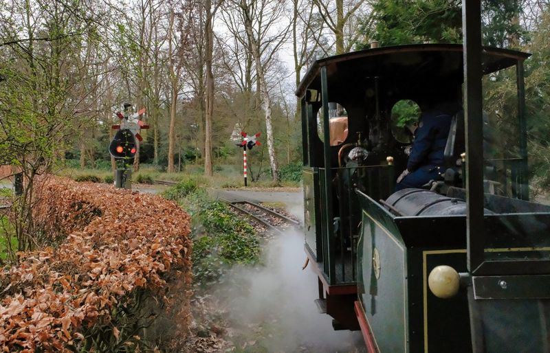Attraction theme park the Efteling, Kaatsheuvel, the Netherlands Transportation Mode Of Transportation Men Tree Real People Land Vehicle Group Of People Nature Day Plant People Outdoors Forest Travel Train Incidental People Standing Street Public Transportation Rail Transportation